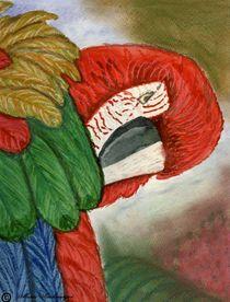 Parrot by Marie Luise Strohmenger