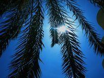 Unter Palmen von alicante