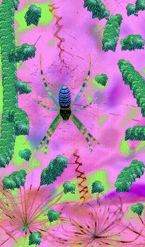 Argiope in Pink von Rainar Nitzsche