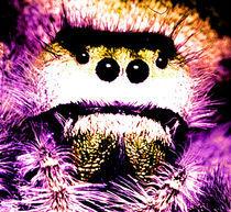 Spinnengesicht von Rainar Nitzsche