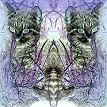 Spiegelzwillingskatze von Rainar Nitzsche