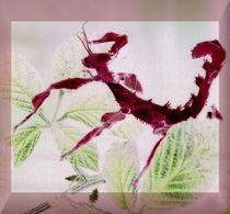 Gespenstschrecke Extatosoma by Rainar Nitzsche