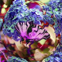Segelfalter im Blütenrausch von Rainar Nitzsche