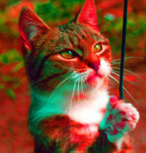 Spielende Katze in Rot von Rainar Nitzsche