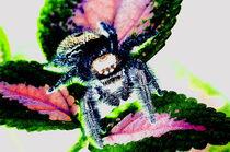 Spinne und Buntnessel von Rainar Nitzsche