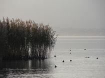 Herbst am See von Georg Portet