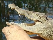 Das Krokodil by Georg Portet