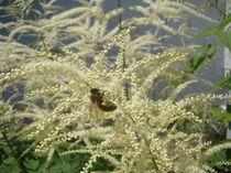 Die fleissige Biene von Georg Portet