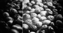 snail party. von sommerpfuetze