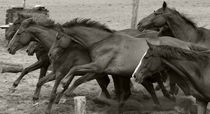 Puszta-Pferde von Ines Schäfer