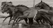 Puszta-Pferde by Ines Schaefer