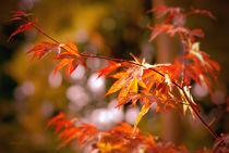 Herbstleuchten von fraudoktor
