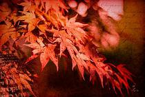 Herbst im Farbenrausch by fraudoktor