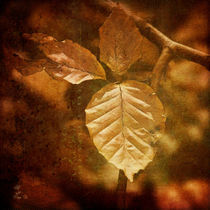 Herbstbuche by fraudoktor