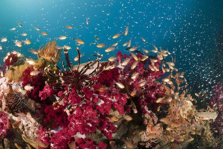 Korallenriff fotografie als poster und kunstdruck von for Zierfische barsch