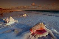 Muscheln am Strand von Reinhard Dirscherl