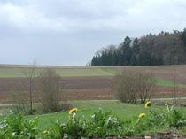 März bei Rudolfingen von Billo Heinzpeter Studer