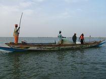 Netz einholen - Saloum, Senegal - fair-fish.net by Billo Heinzpeter Studer