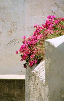 MAUERblümchen von pichris