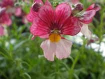 Blume von Henriette Abt