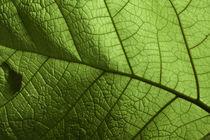 Green von Raul Lieberwirth