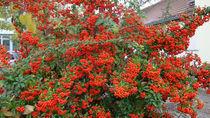 Herbstleuchten by baumfreund