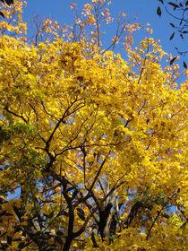 Golden by baumfreund