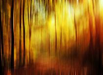 Herbstwald von Bernhard Kosten