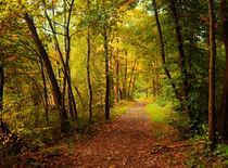 Waldweg im Herbst von Bernhard Kosten