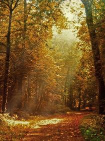 Herbst im Schloßpark by Bernhard Kosten