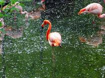 Flamingo-rot von raphael klein