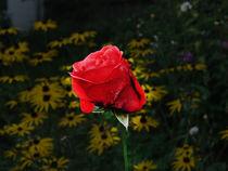 rose by raphael klein