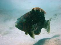 Fisch im Roten Meer von niehauto