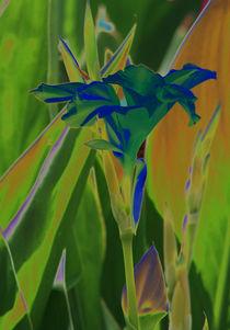 Blauer Engel im Feld von Susanne Brutscher