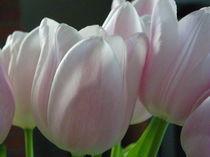 Zarte Versuchung von Wiebke Blume