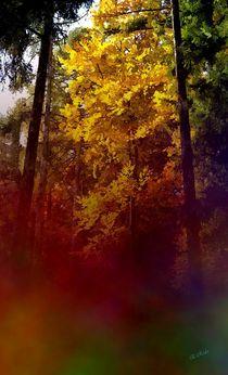 Herbstleuchten by Eckhard Röder
