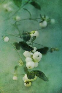 Snowberries von Priska Wettstein