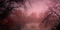 Misty Morning Light von Priska Wettstein