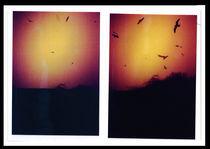the birds by Jeroen Derks