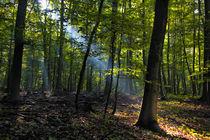 Der Wald erwacht by Anja Abel