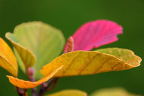 Der Herbst ist da by Anja Abel
