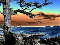 Wild Pacific Trail von Anja Abel