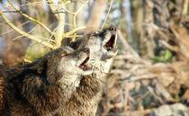 Der mit dem Wolf heult by Anja Abel