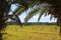 Mallorcas Landleben von Anja Abel