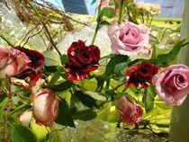 Rose 14 von Ka Wegner