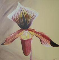 Frauenschuh, Orchidee by Daliah Sölkner