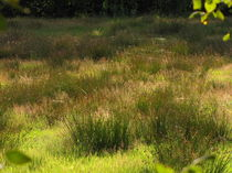 gräser im Moor von claudia kornwebel