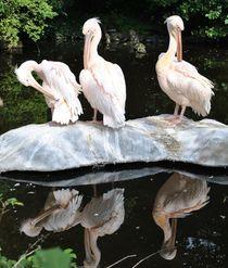 Pelikan von Heike Dubis