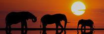 UNTER DER SONNE AFRIKAS by Heiko Lehmann