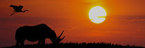 GRASENDES NASHORN IN AFRIKA by Heiko Lehmann